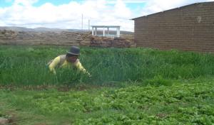 'Wij hebben nu meer de oogst in eigen hand'